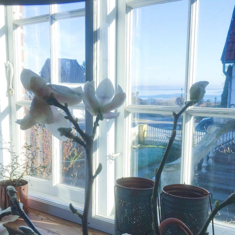 havudsigt og magnolia